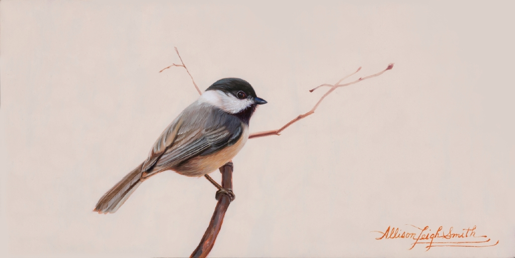 Allison Leigh Smith - Black Capped Chickadee